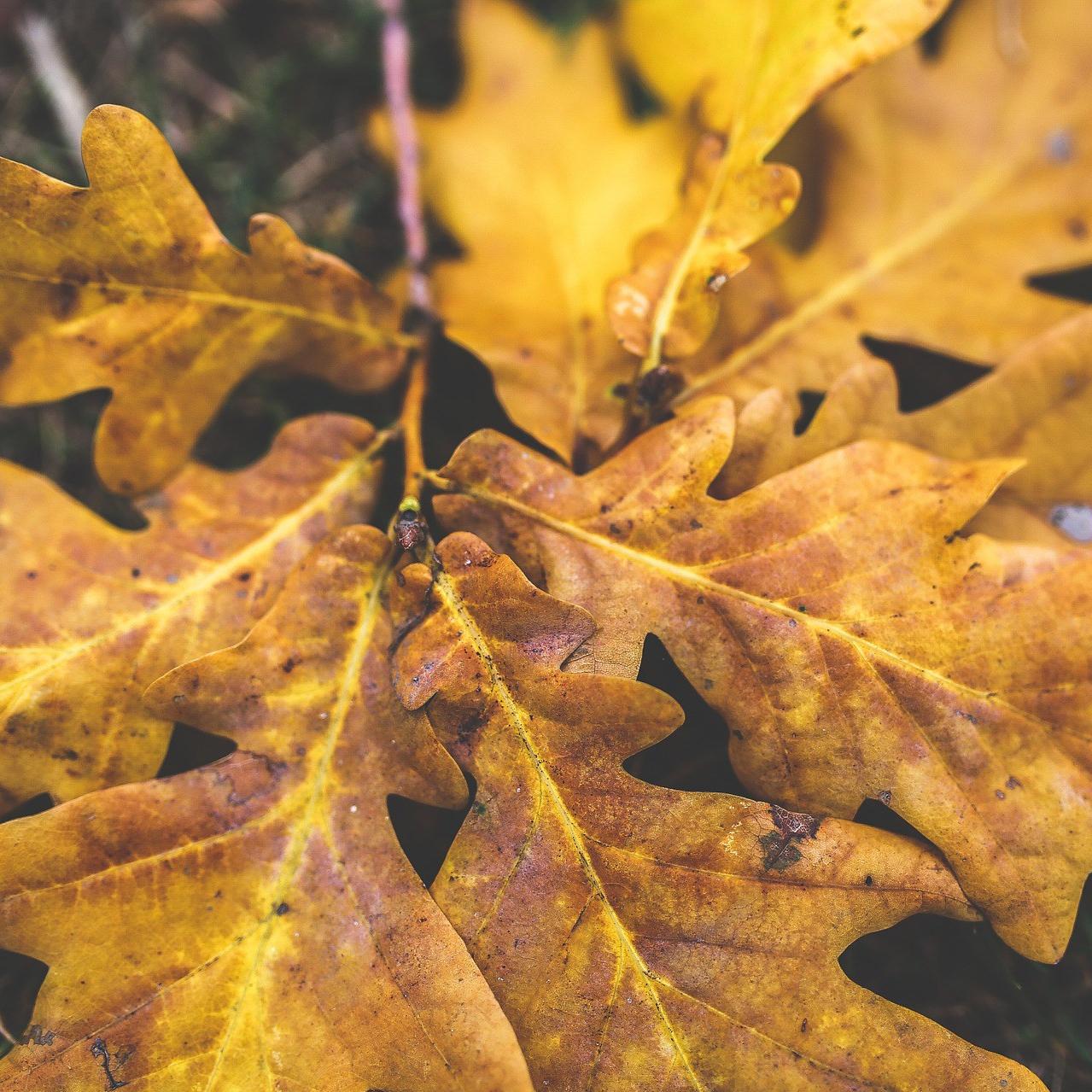 leaves-791246_1920.jpg
