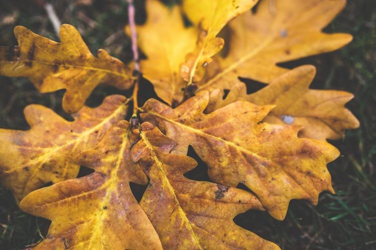 leaves-791246_1920